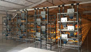 Broiler cage system consisting of 4 rows each 4 tiers, 25 sections.